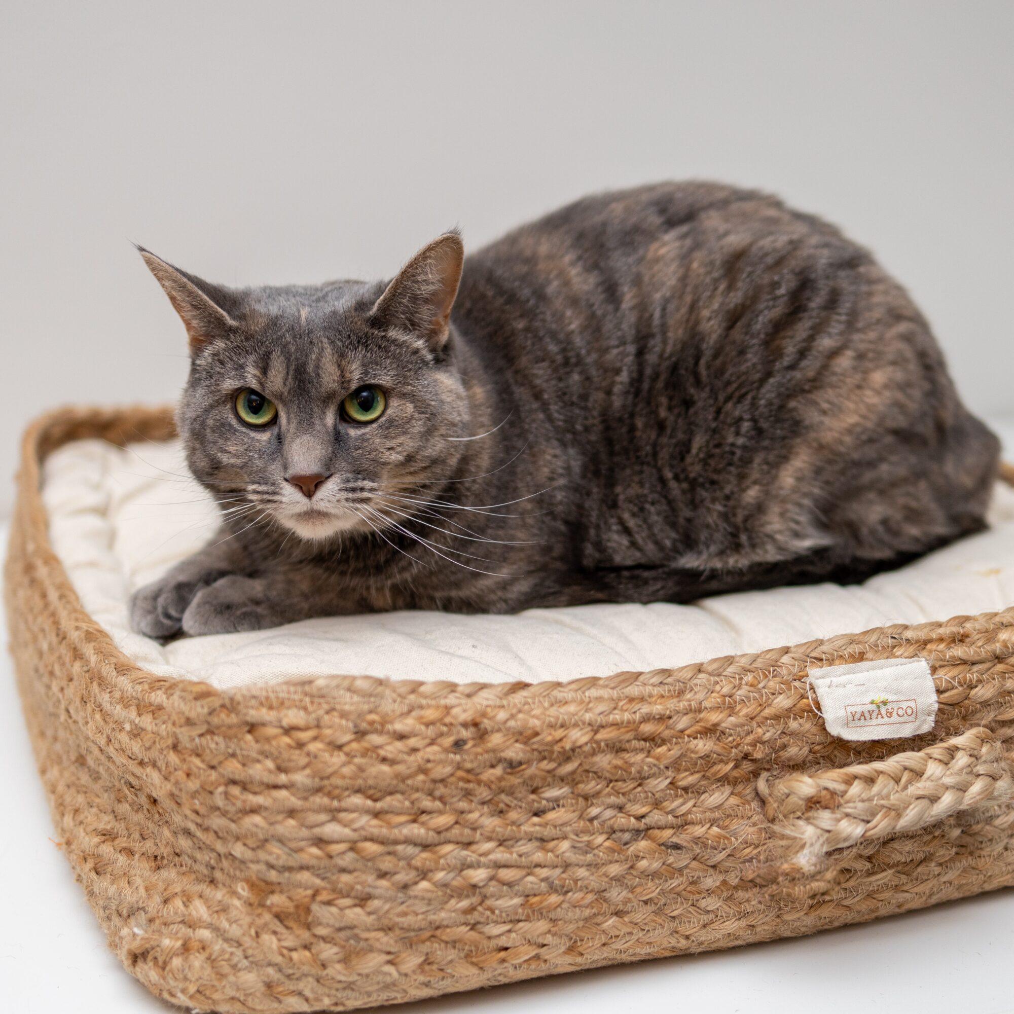 En katteseng som din kat fortjener