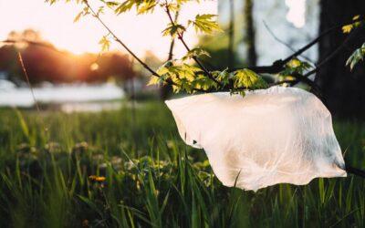 5 hurtige tips du kan gøre i hverdagen for et grønnere klima